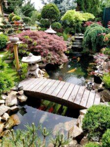 Thiết kế thi công hồ cá Koi | Thiên Đức Stone