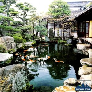 Thiết kế thi công hồ cá Koi đẹp | Thiên Đức Stone