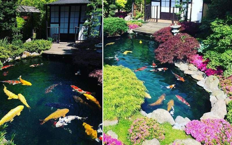 Tự làm hồ cá sân vườn nhỏ đẹp | Thiên Đức Stone